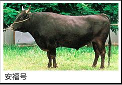 飛騨牛イメージ