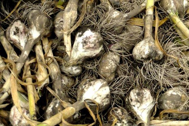 無添加の健康食品を支える無農薬栽培について