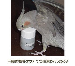 YotsuhaChan.jpg