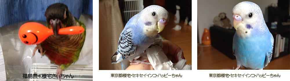 /mybird1.jpg