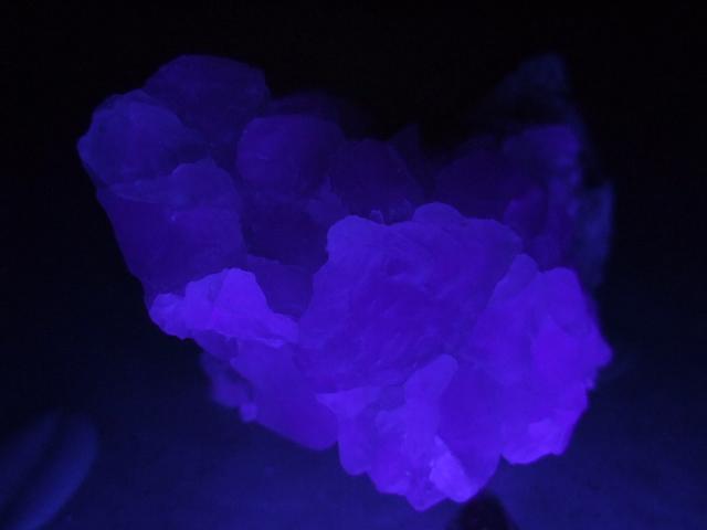 ブラックライトを 当てると、実際は 真紫になります