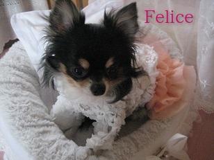 Online Shop Felice