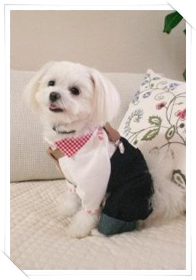 愛犬のブログ