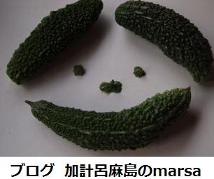ブログ 加計呂麻島のmarsa