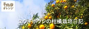 柑橘栽培日記ブログ