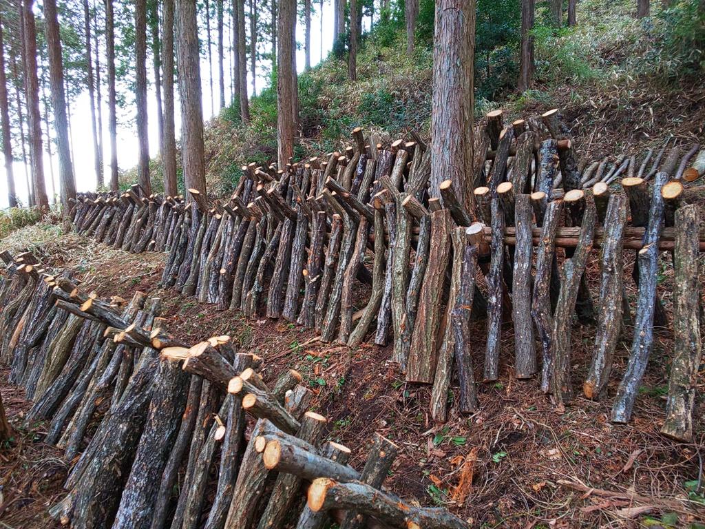 岐阜県恵那市の山から切り出した、原木を使用し、恵那市の菌床屋さんの椎茸の菌を使い、恵那市岩村町の空気澄んだ山の中で育てています。