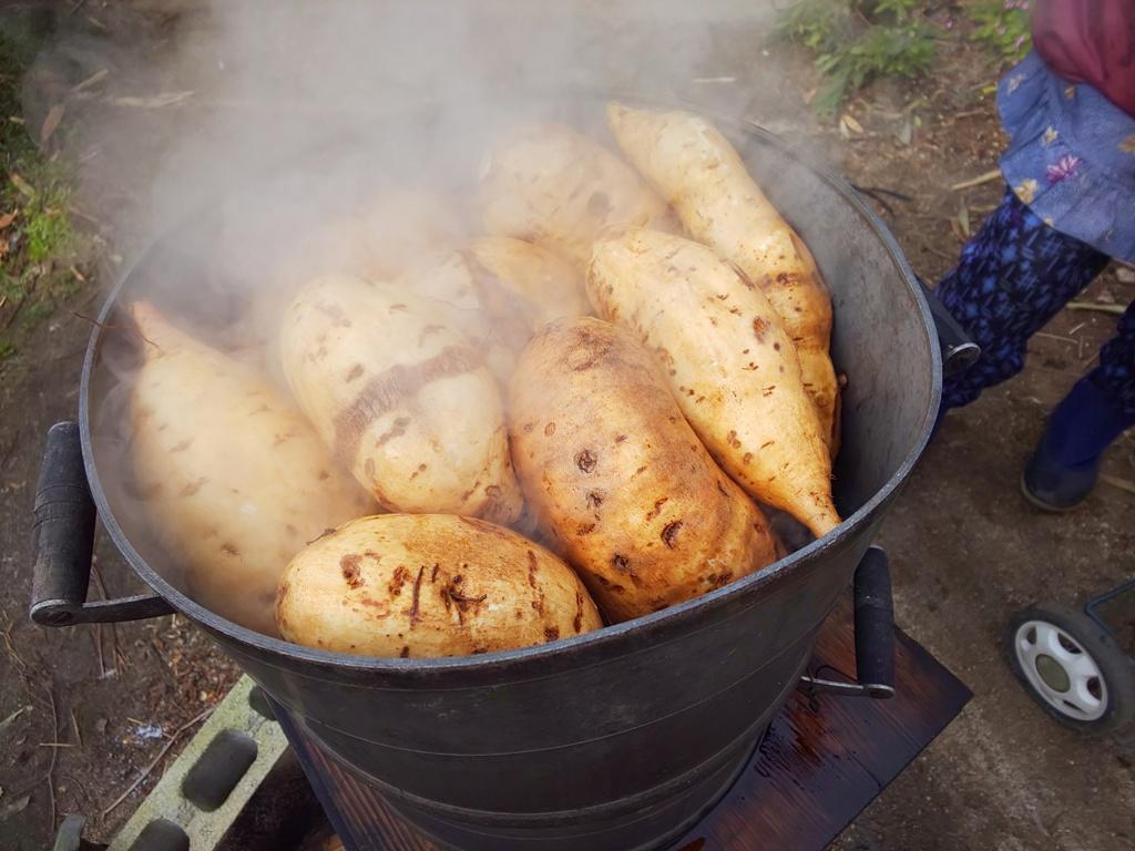 干し芋用のさつま芋、泉13号が蒸しあがったら、皮を剥きます。
