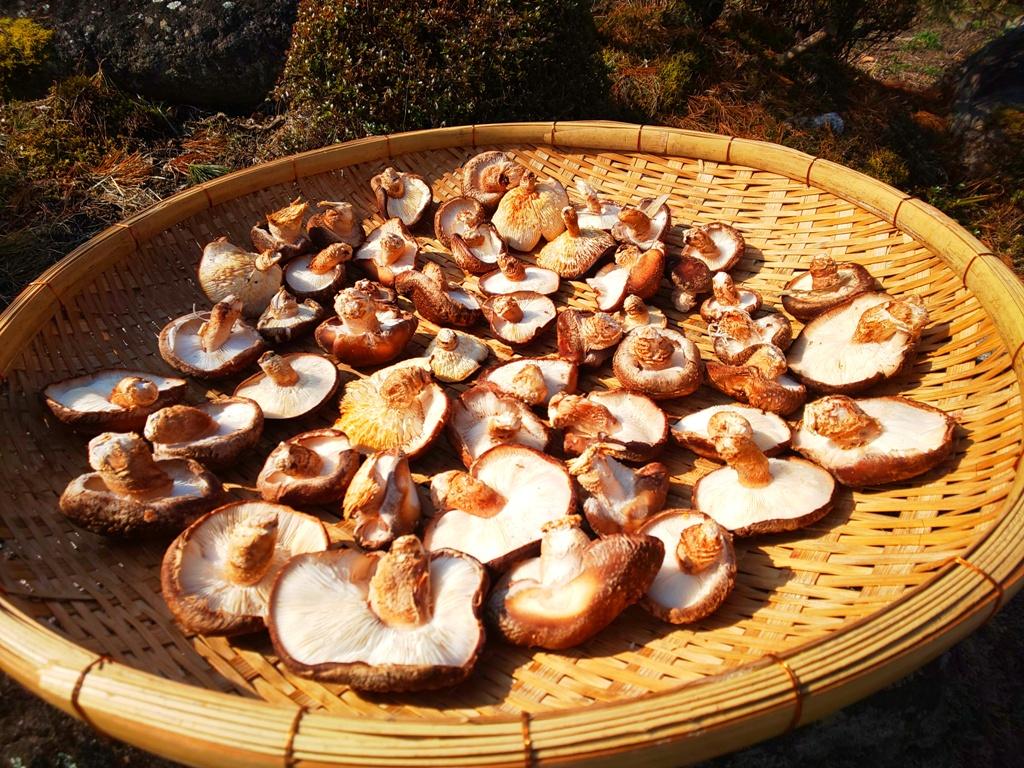 干し椎茸の乾燥には、人工的な乾燥機、ビニールハウス等を使わず、完全天日のみで干しあげた、貴重な原木栽培干し椎茸になります。
