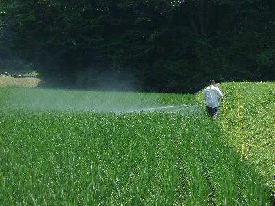 お米の農薬やりを行いました。ぜんちゃんふぁーむオリジナルの自家製無化学農薬に、少し化学農薬を混ぜて、お米の害虫駆除を行います。自家製のニンニクと唐辛子の匂いで、嗅覚的には効き目十分な気が!