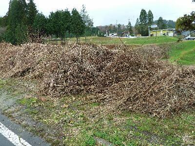ハウス栽培葡萄 、開園以来、化学肥料不使用、除草剤不使用、化学農薬削減 当地比5割削減の、ぶどうです。